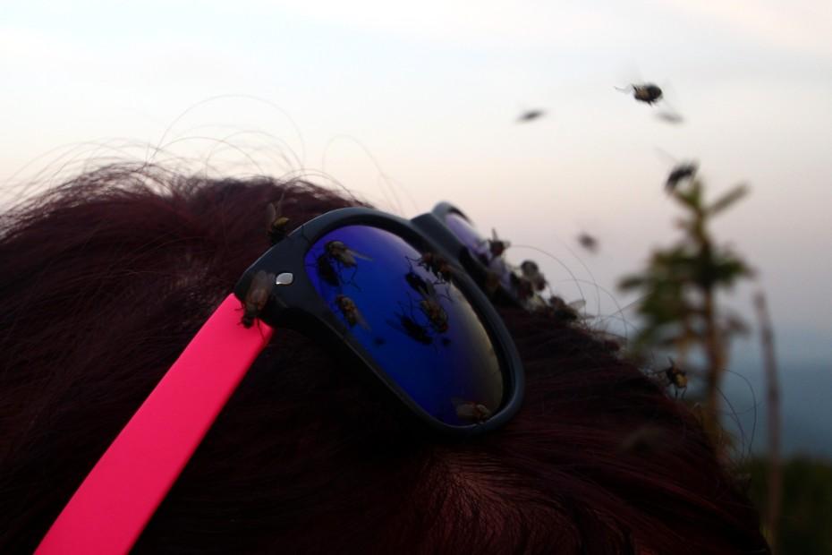 Otravné mouchy po cestě nahoru