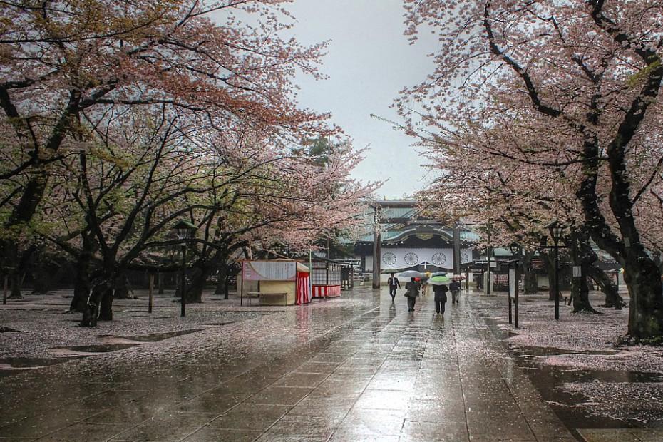 Sakury v areálu svatyně Jasukuni
