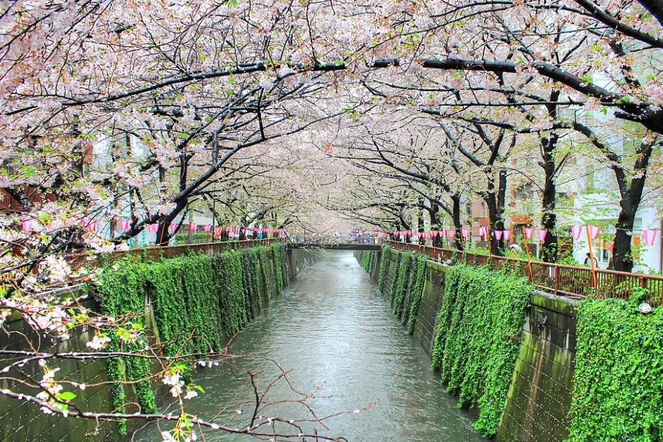 Sakury lemující vodní kanál