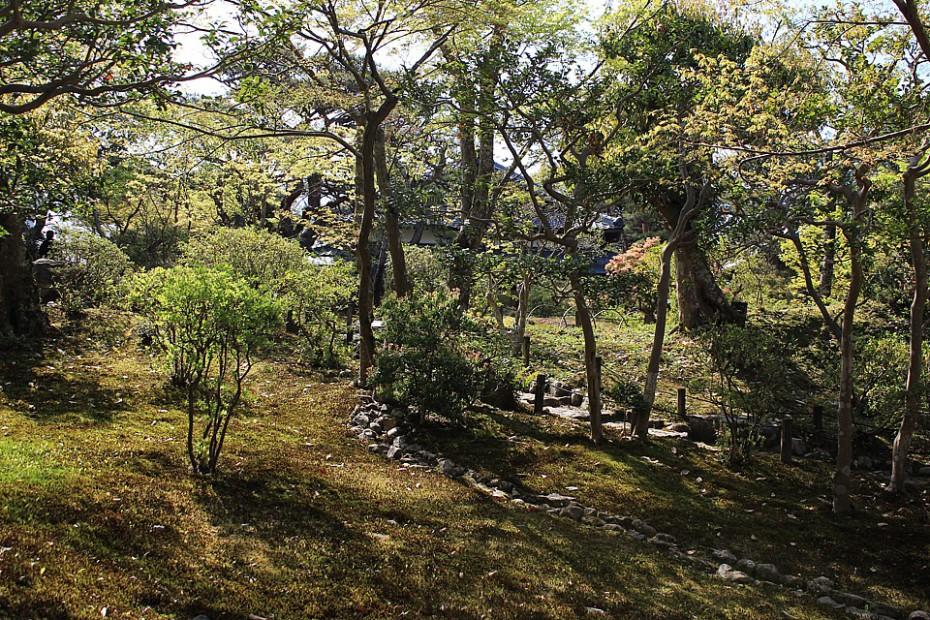 Isuien je především mechová zahrada s azalkami a javory momidži