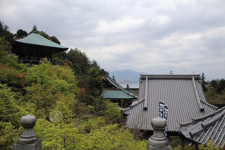 Pohled na střechy areálu s javory momidži